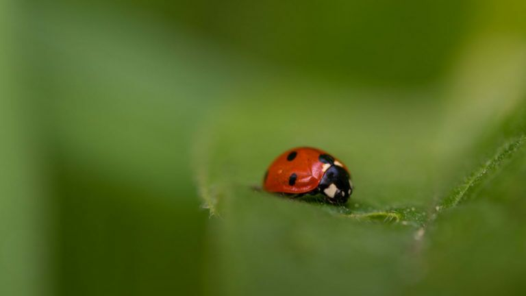 Biological control can repel houseplant pests.