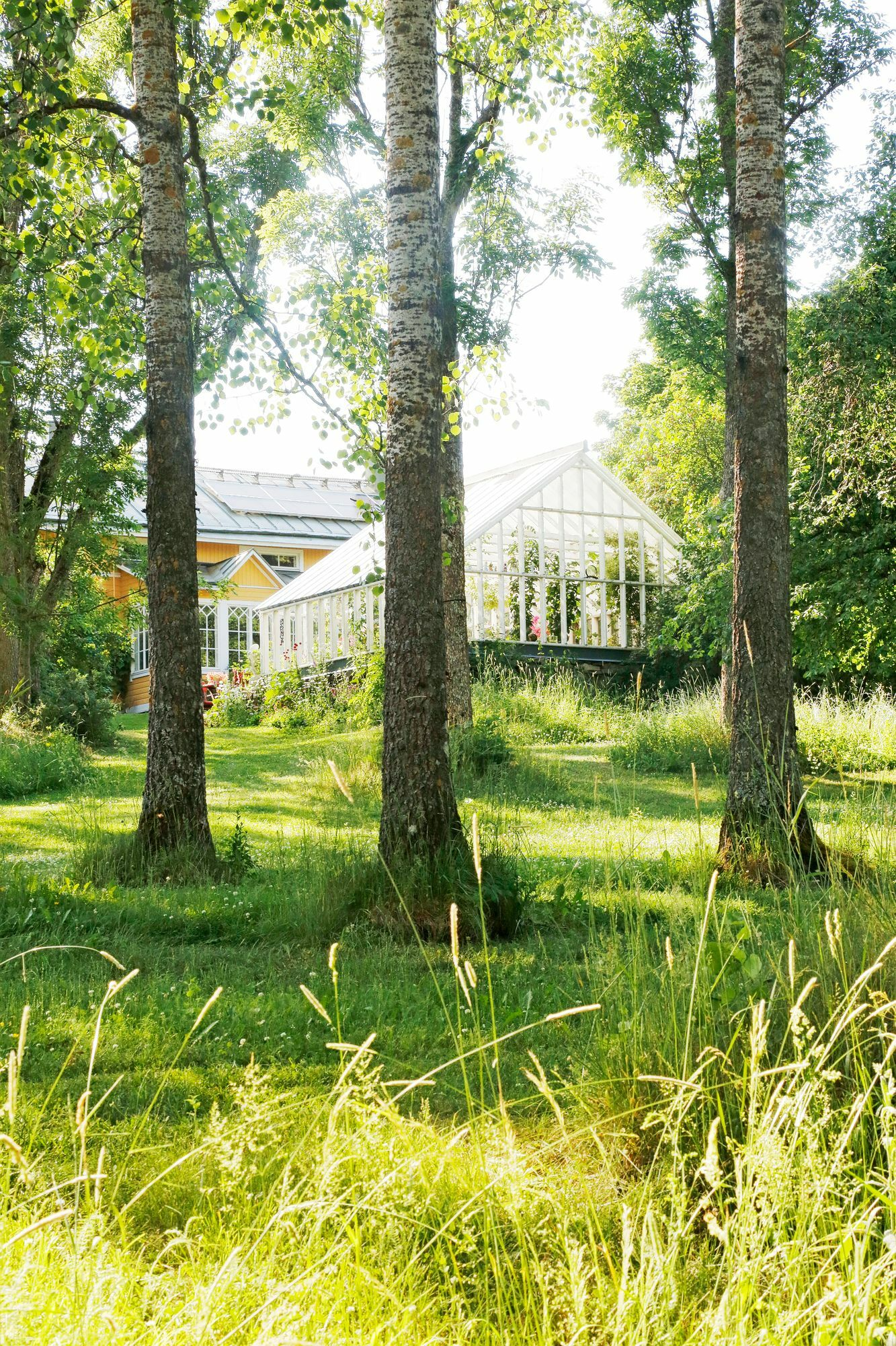 The large greenhouse is made in English style.  It fits beautifully as a pair in an old house.  There is space for nature in the yard.  Juha leaves uncut areas in the grass area as meadows.