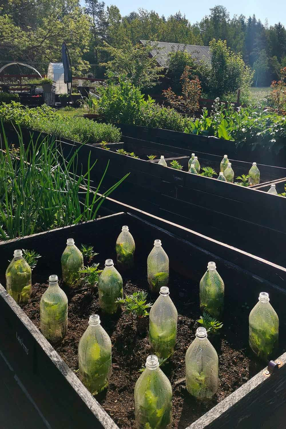Bottle greenhouse outdoors