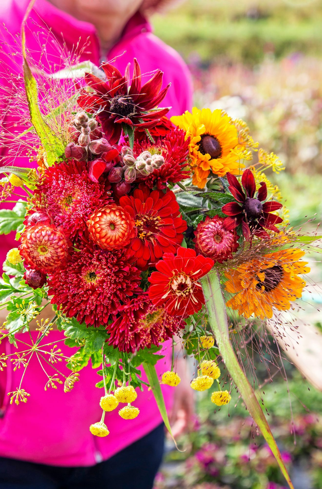 The flower field provides ingredients for abundant bouquets.  The red assault has been assembled with 'Copper Red' evergreens, 'Matador' asters, 'Benary Giant' throws, 'Goldilocks' summer day hats, lion weavers and 'Fountain' millet.