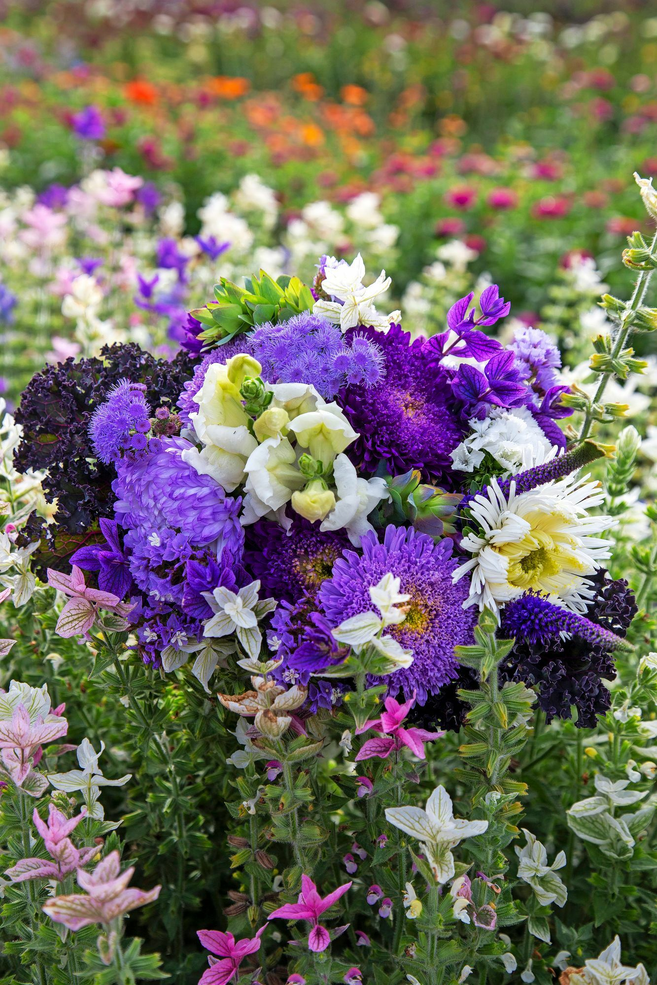 The blue-and-white bouquet features lion warblers, 'Timeless' blue stars, a variegated sage, a Matadoraster and a 'Blue Kiwi' big wax flower.