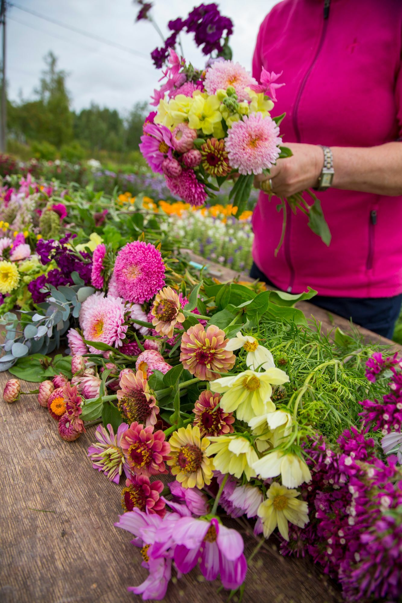 Bouquet flowers should be picked as soon as the morning, when the liquid tension of the plants is at its best.