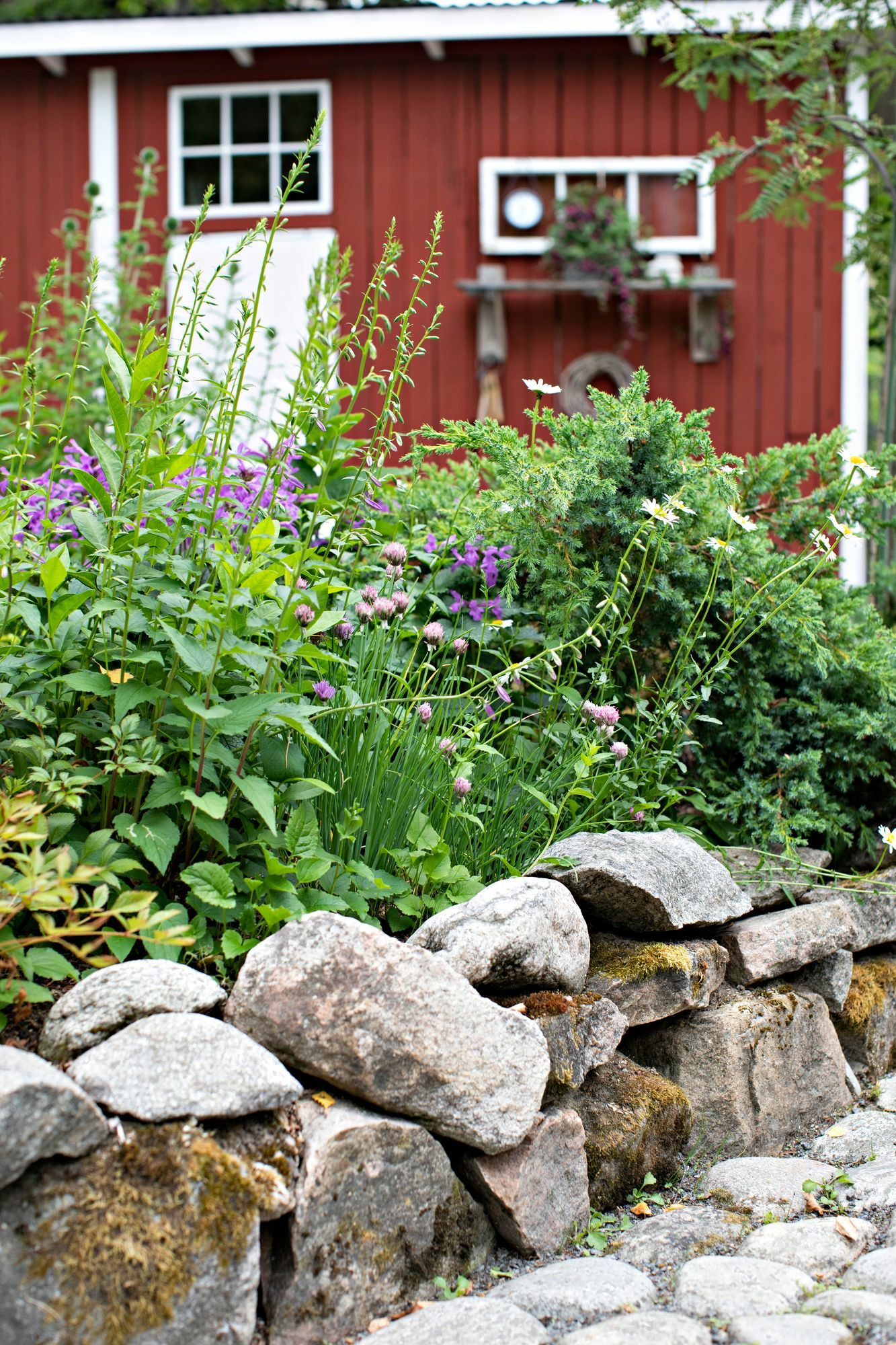 The stone yard utilizes the natural stones found on the plot at the edges of the raised benches.  They have 20 to 30 centimeters of soil above the ground.  Perennials thrive on a raised bench, as the ground melts in early spring and in winter the plants do not suffer from winter wetness.
