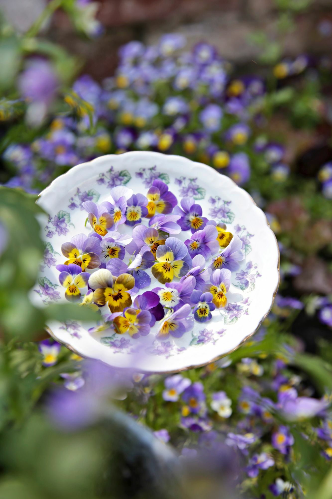There are surprisingly many edible flowers!  The flavors range from the gentle sweetness of the violets to the hotness of the cress.