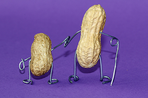 peanut-660301_1920