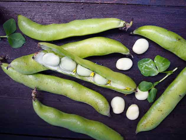 Härkäpapu on hyvin proteiinipitoinen kasvis.