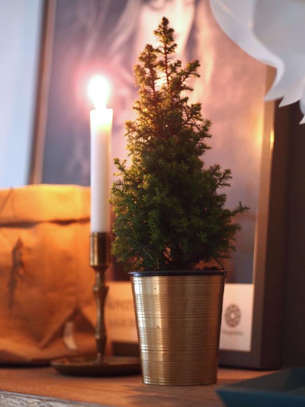 jouluasetelma