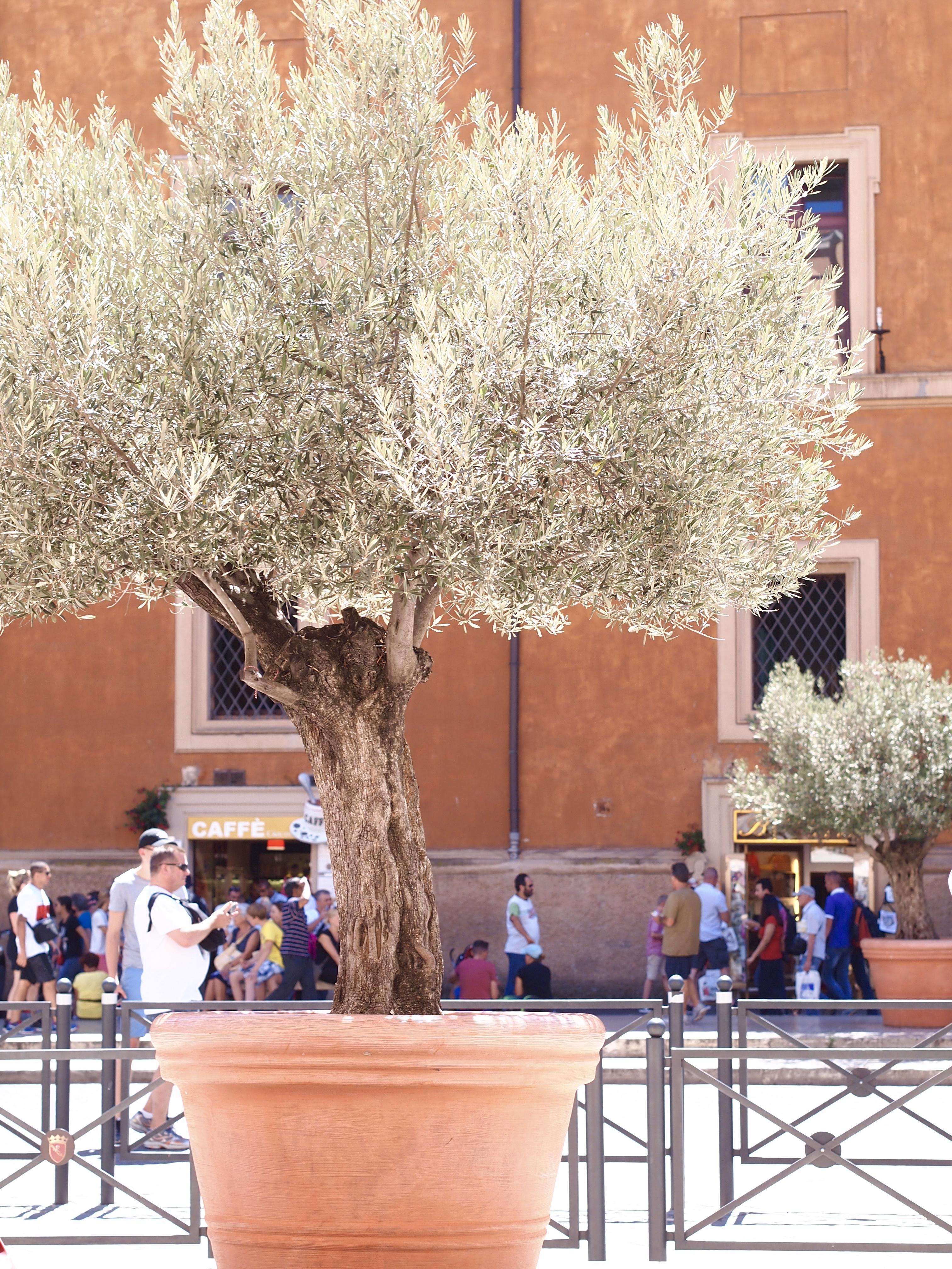 häämatkalle italiaan Roomaan