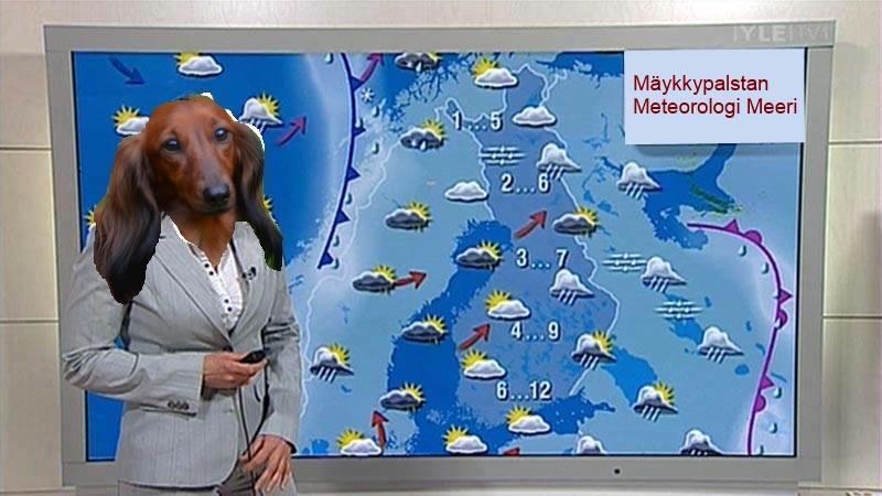 Mäyräkoirakasvoinen meteorologi sääkartan edessä.