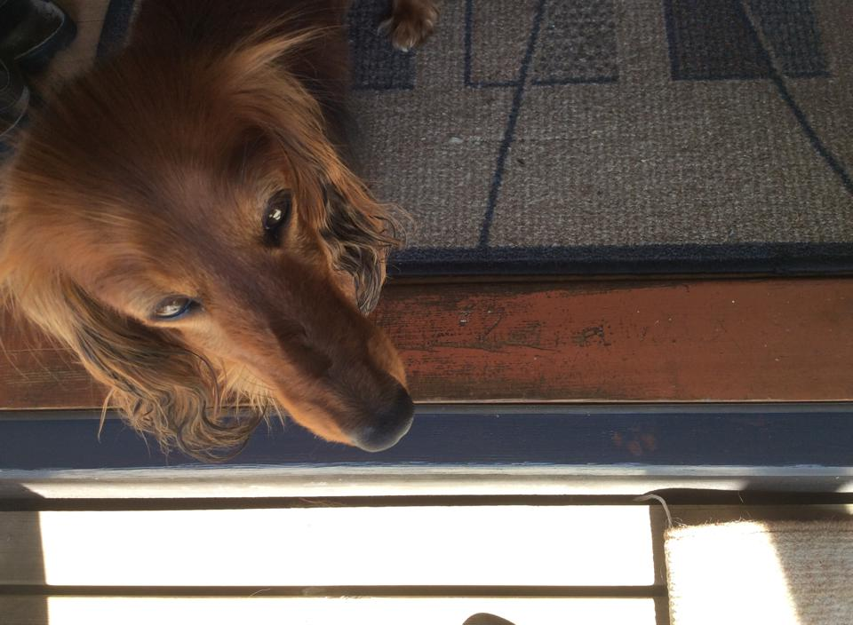 koirakopla, kotiliesi, Hulda
