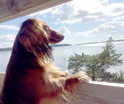 Koirakopla, Hulda, Kotiliesi, merimaisema, mäyräkoira