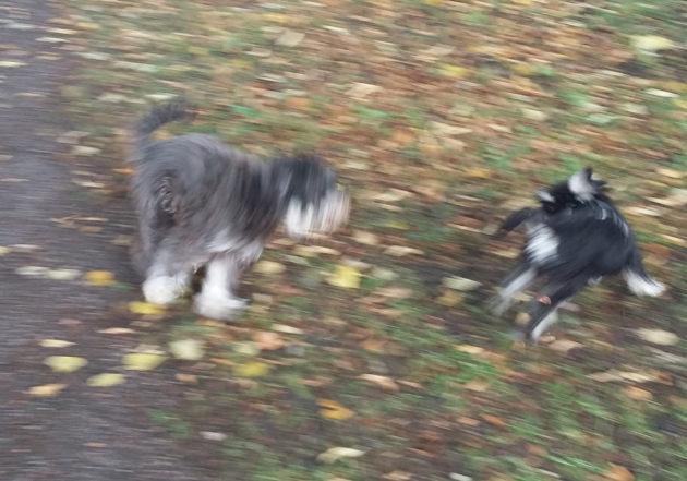 Kääpiösnautserit Vickan ja Reino painivat puistossa niin, että puiden lehdet vain lentelevät.
