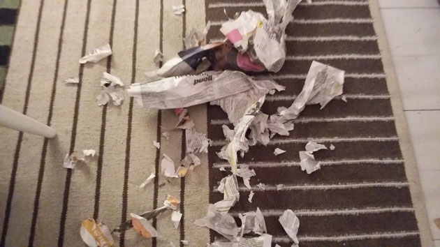 Sanomalehden luku on yhteinen ilomme.