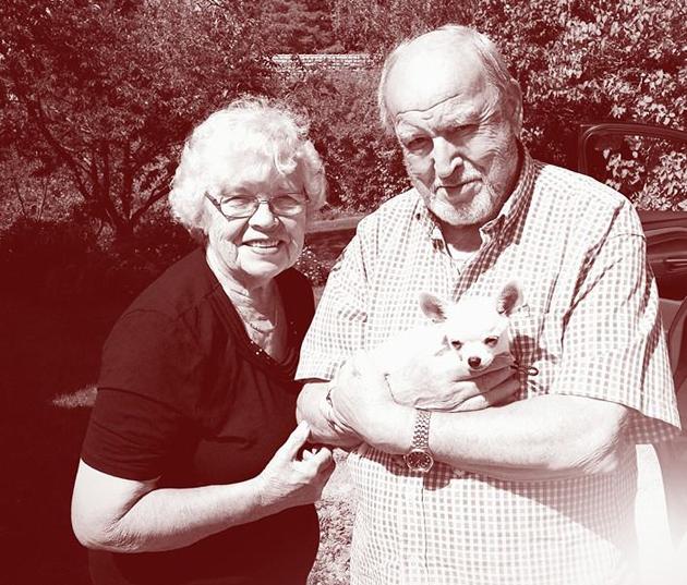Isovanhemmat ja chihuahuanpentu.