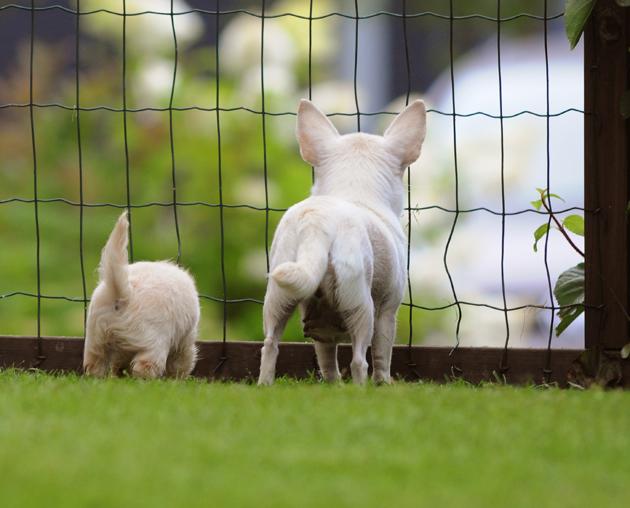 Äiti ja tytär chihuahuat kotiportilla. Uudet seikkailut odottavat!