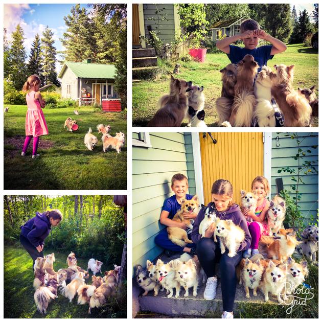 Näinä koirattomina viikkoina meitä ovat ilahduttaneet ystävät ja heidän ihanat koiransa. Elokuussa vierailimme Tuusulassa tapaamassa näin ihastuttavaa chihuperhettä. ?