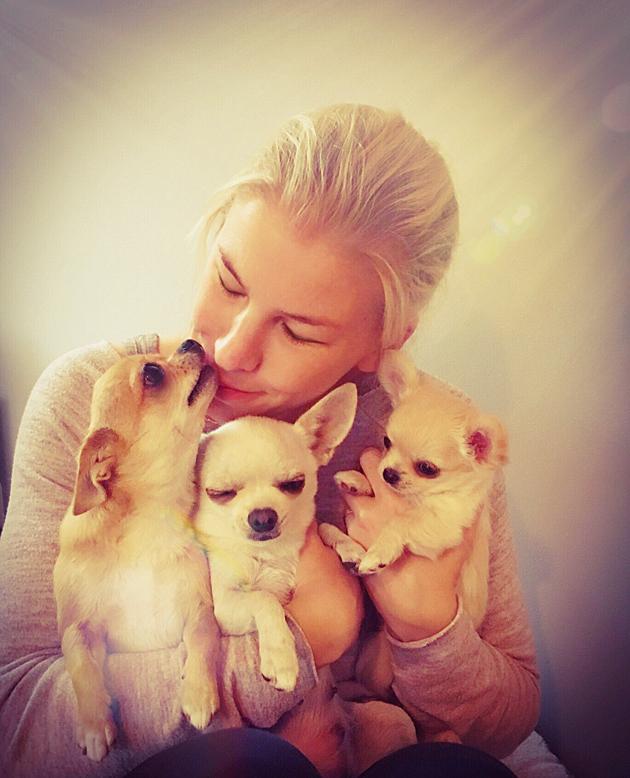 Chihuahuat Eeva, Liisa ja Laura ovat palanneet kotiin.