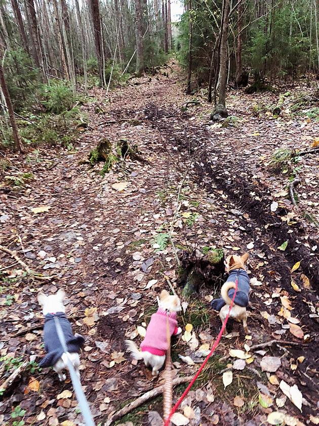 Tämän metsäpolun päässä meinasi pienille käydä huonosti. Irtokoira yllätti meidät mutkan takaa.