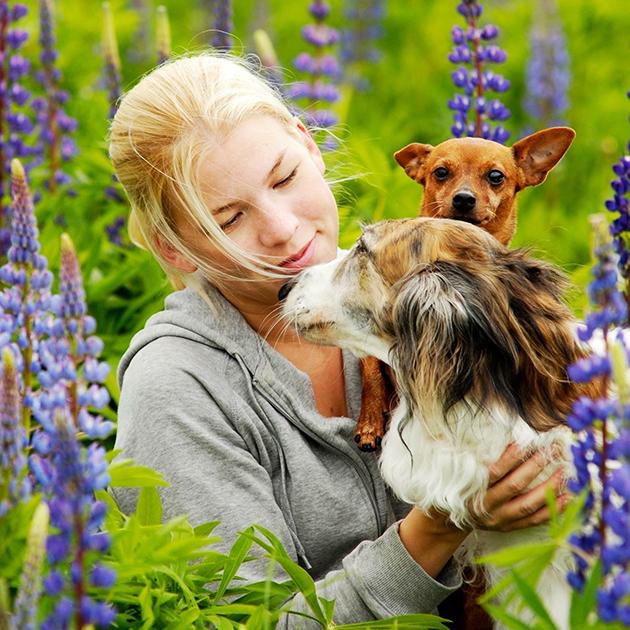 Omistaja ja koirat pellolla. Borzoi ja kääpiöpinseri