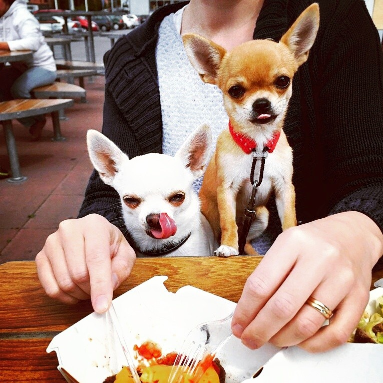 Chihuahuat mäkkärissä.