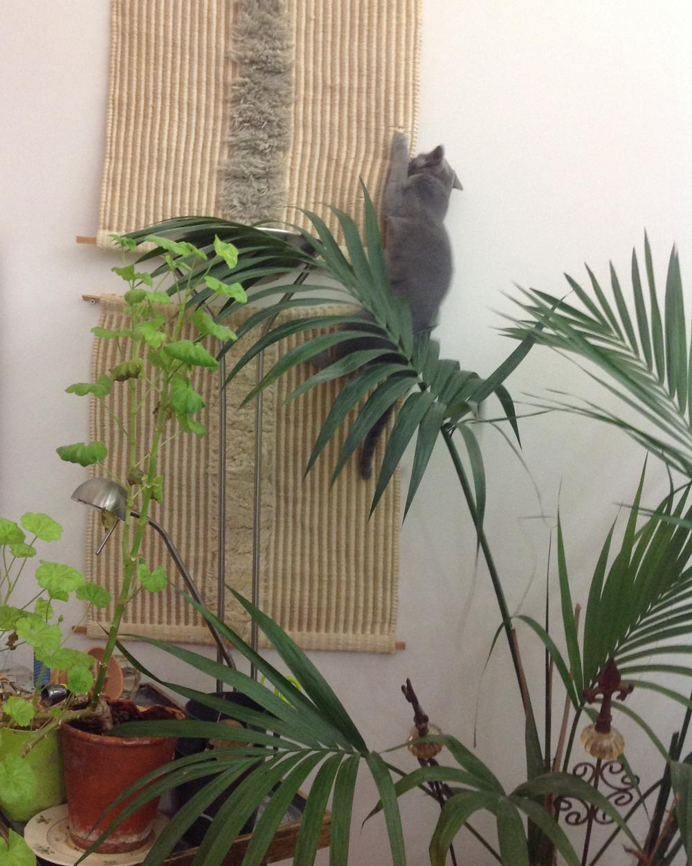 hulda kissa seinällä