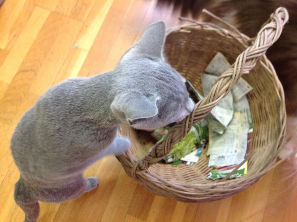 hulda kissa siemenpussit