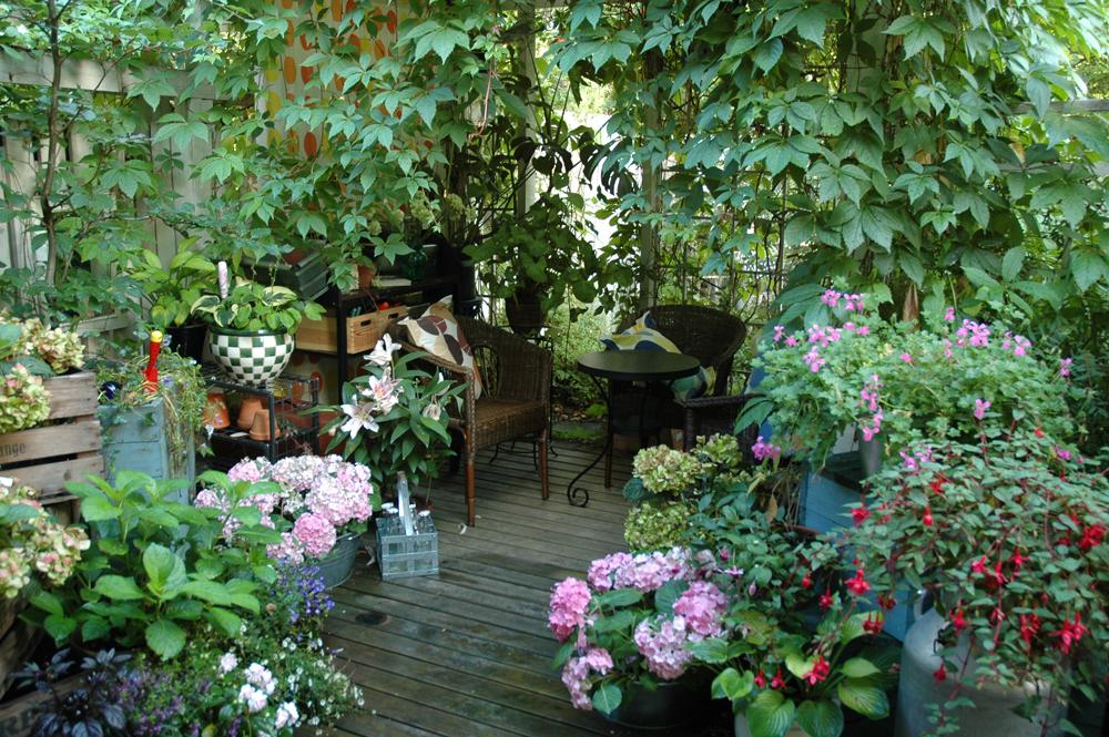 hortensiat ja terassi