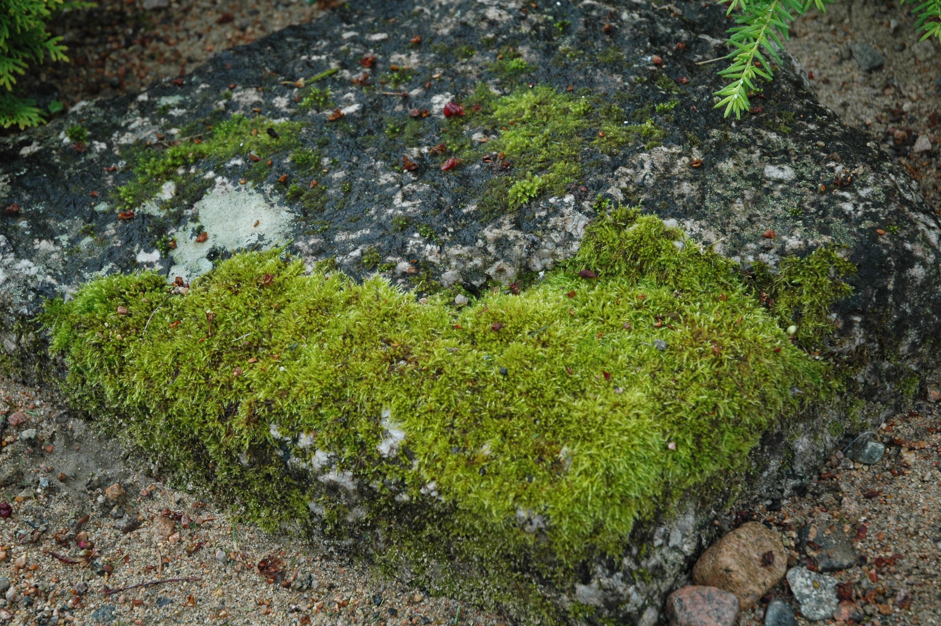 kivessä sammalta
