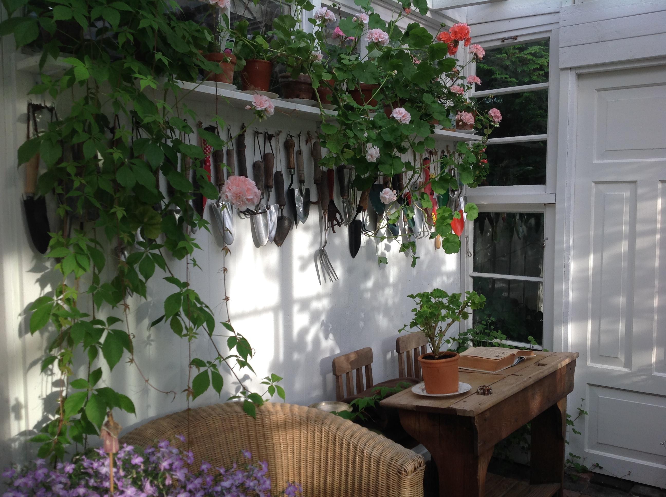 paratiisi takapihalla