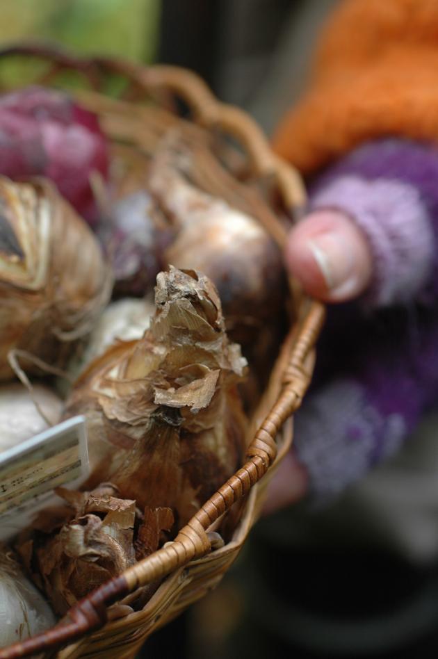 kukkasipulit astiassa