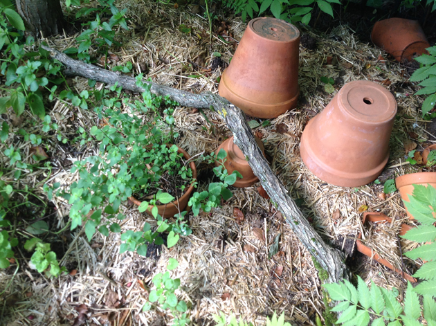 pökkelö puutarhassa