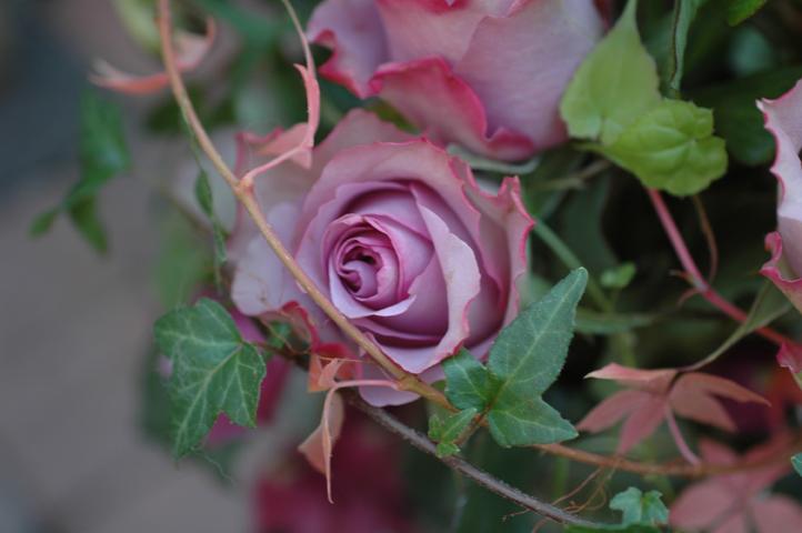 ruusu terassilla