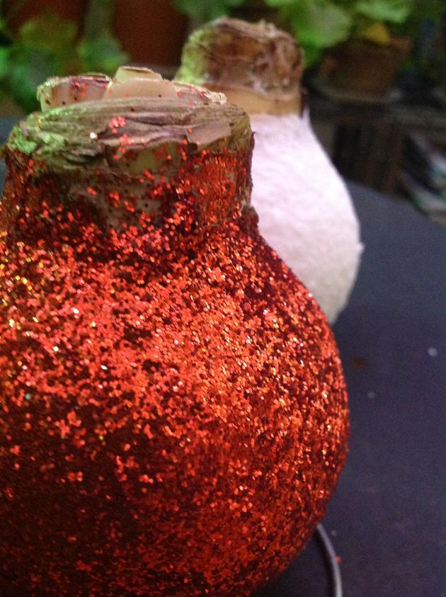vahapintainen amaryllis