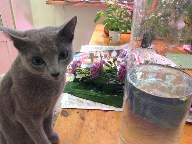 kissa-ja-kukat