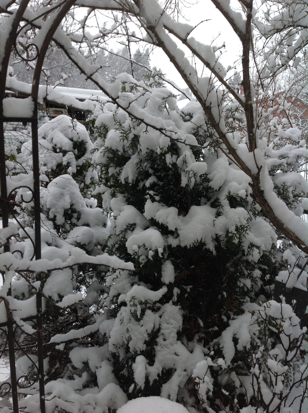 havu-lumessa-kopio