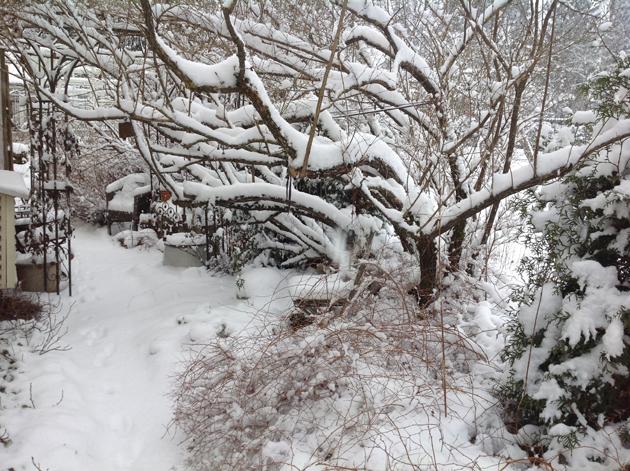 luminen-puutarha-kopio