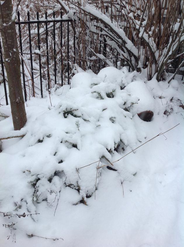 monivuotiset-lumessa-kopio