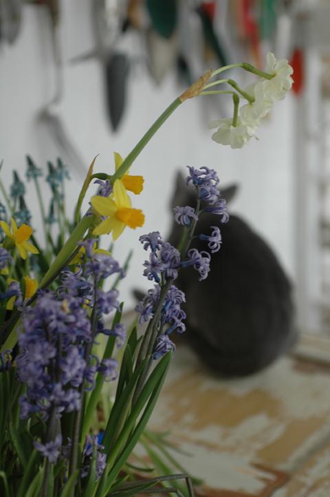 kissa istuu kukkien joukossa
