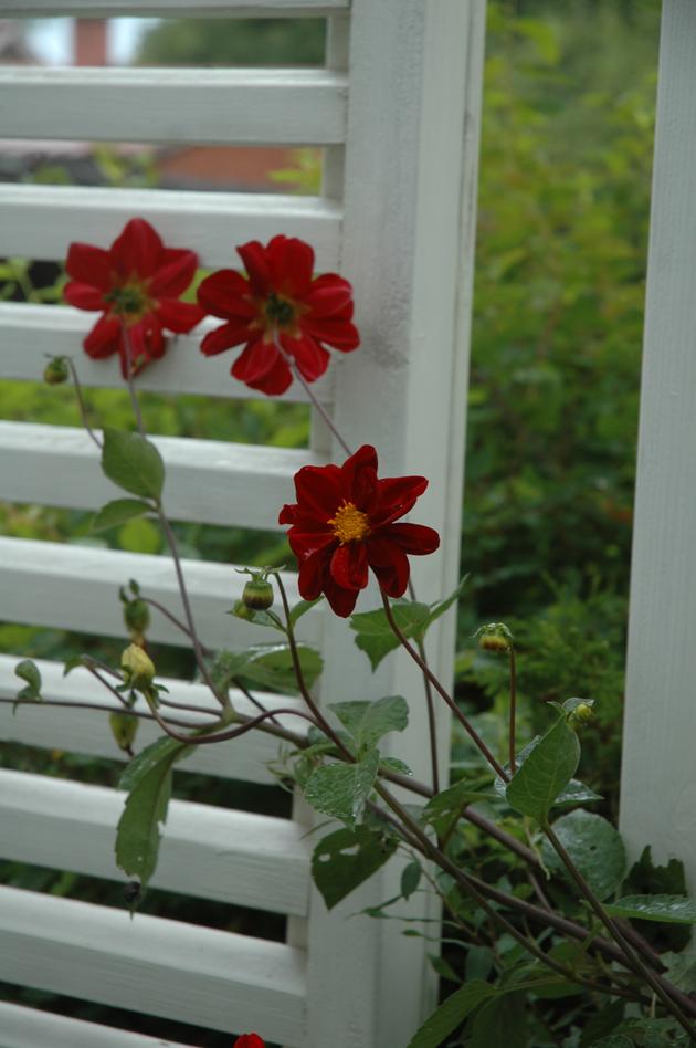 paula ritanen-närhi, puutarhatoimttaja