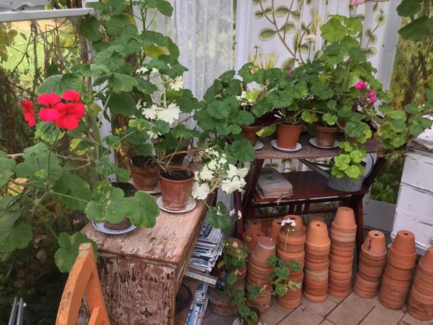 paula ritanen-närhi, puutarhatoimittaja
