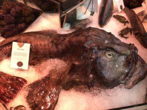 Kaloilla on kokoa!