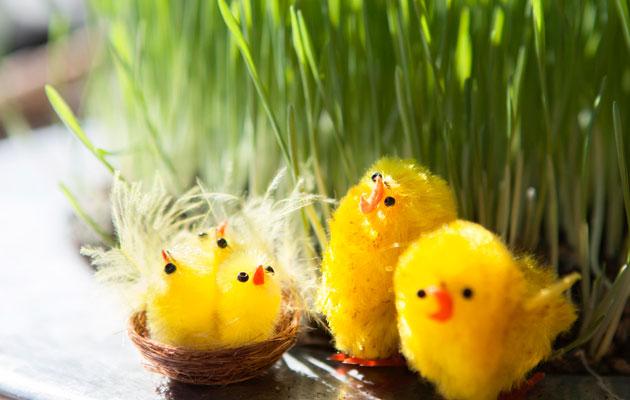 rairuoho ja pääsiäistiput