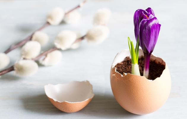 Kukka kananmunan kuoressa