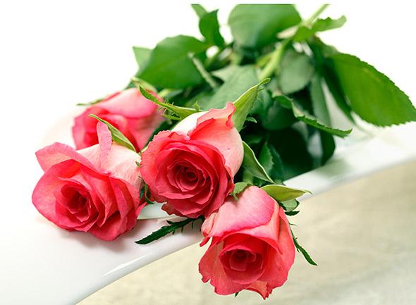 juhlaetiketti-ruusut_590