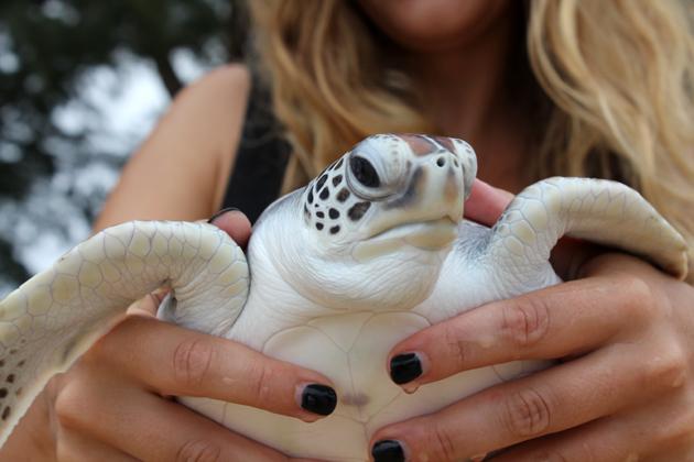 kilpikonna merikilpikonna