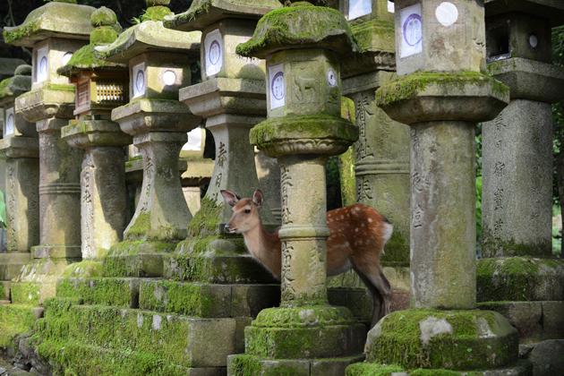 vapaat peurat Narassa