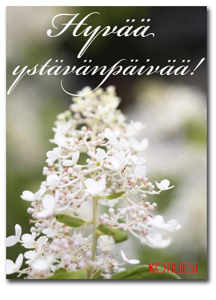 Sano se kukkasin! Hyvää ystävänpäivää e-kortti Kotilieden sivuilta!