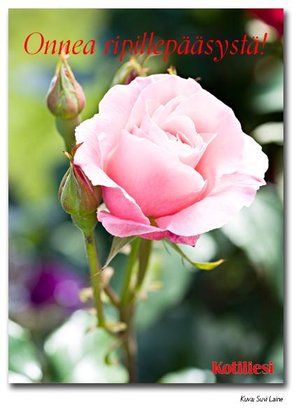 Vaaleanpunainen ruusu: Lähetä Onnea ripillepääsystä -kortti sähköisenä e-korttina