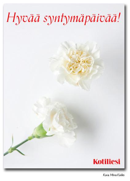 Lähetä neilikka-aiheinen syntymäpäiväonnittelu Kotilieden e-kortilla!