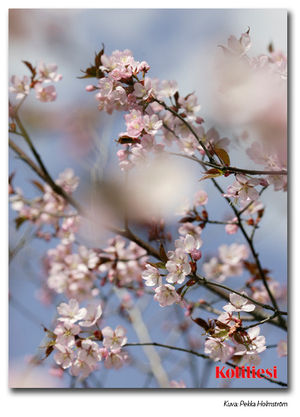 E-kortti vaaleanpunaisilla kukilla